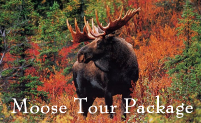 Moose Tour Packages